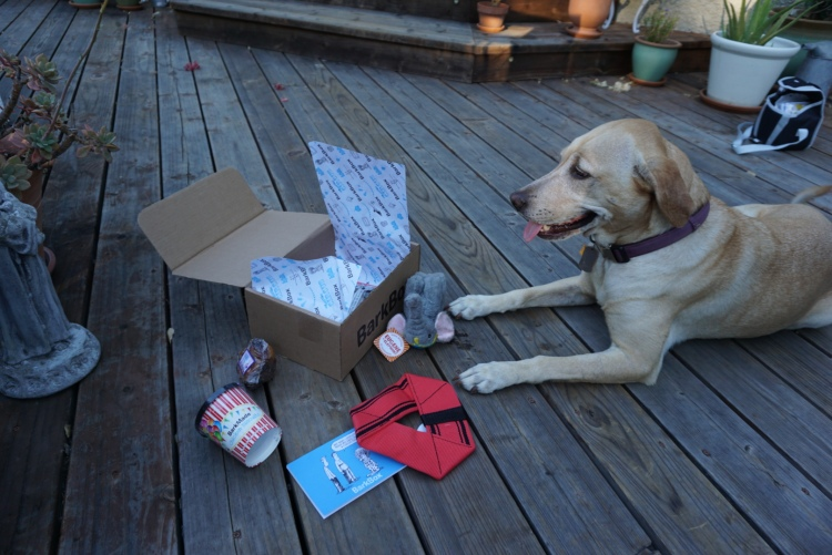 Nala - enjoying the July 2015 BarkBox