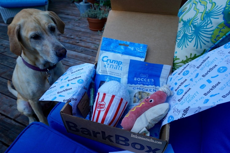 Nala - ready to dig in to the August 2015 BarkBox